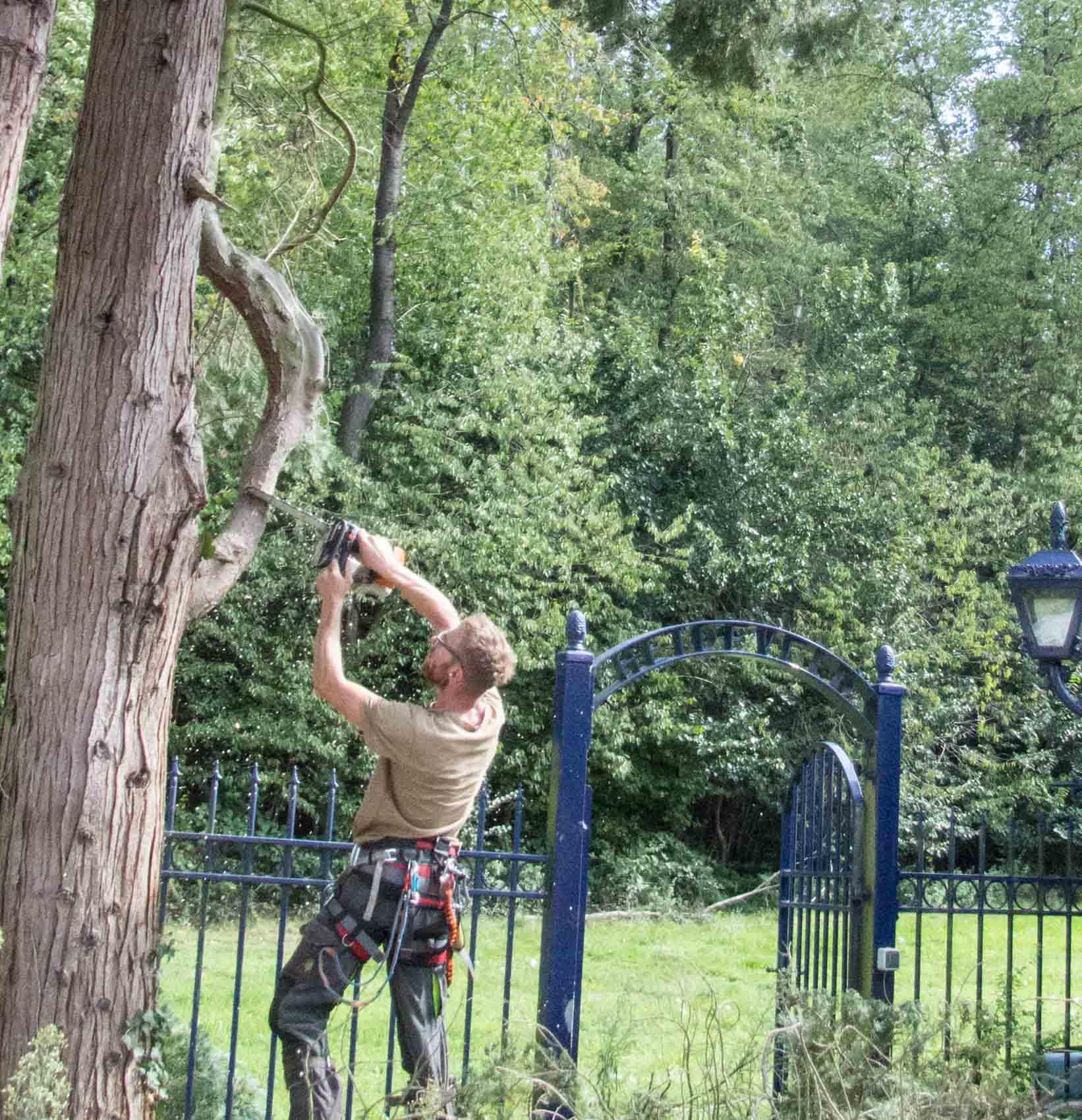 boomverzorging tak weghalen