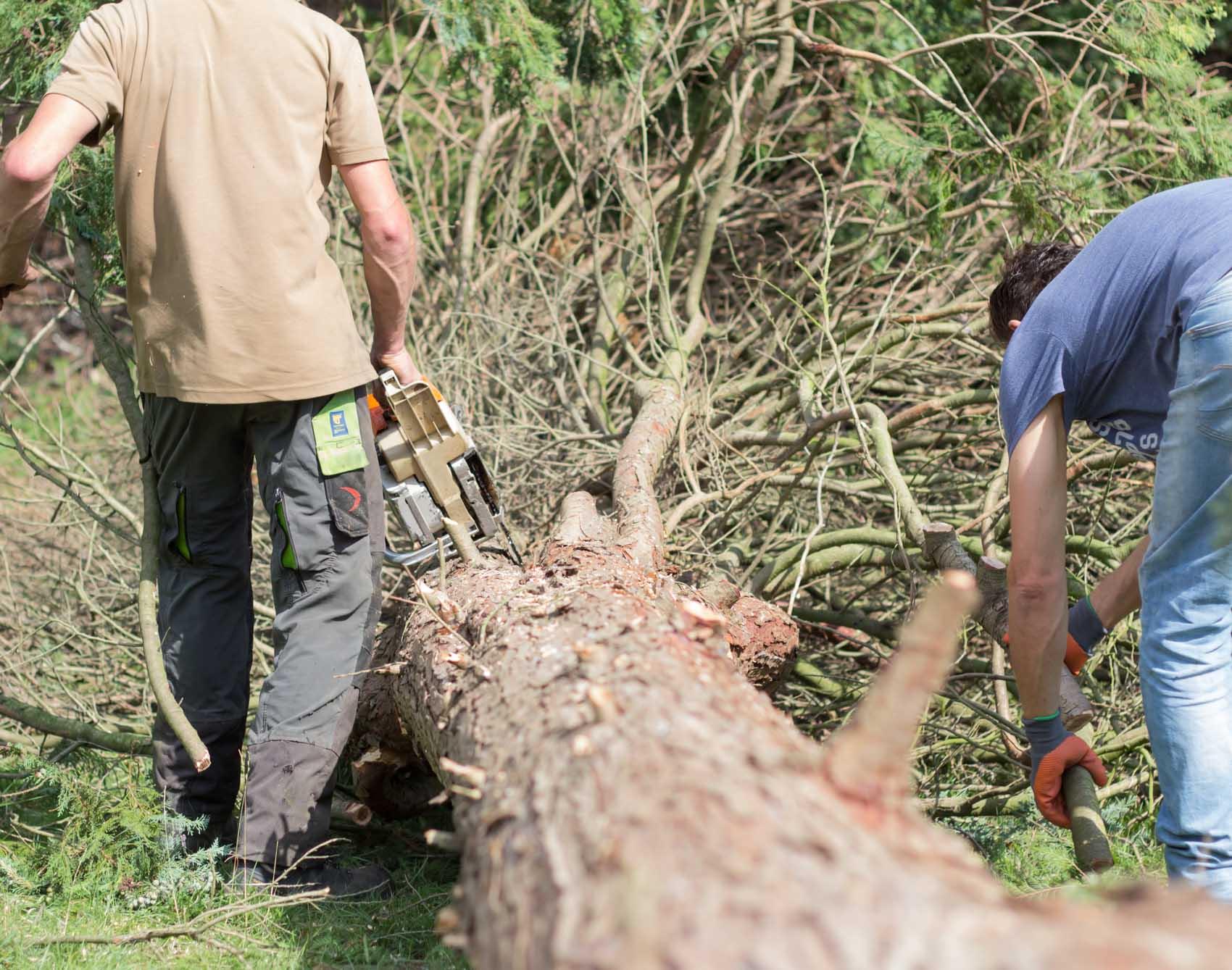 brandhout zagen van uw gekapte boom